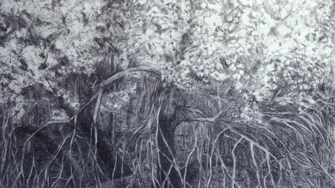 """Scrub Apple Blossoms"" (38"" x 50"", © 2003 Richard Kathmann) graphite on archival paper drawing"